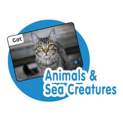 Talking Flash Cards- Animals & Sea Creatures
